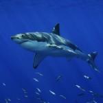 shark package - Advanced Web Application